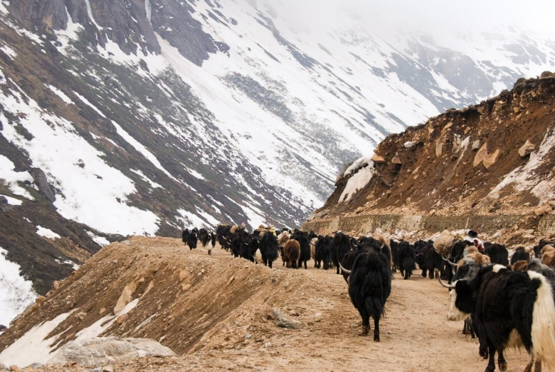 Optimized-Yaks dotting the frozen lands