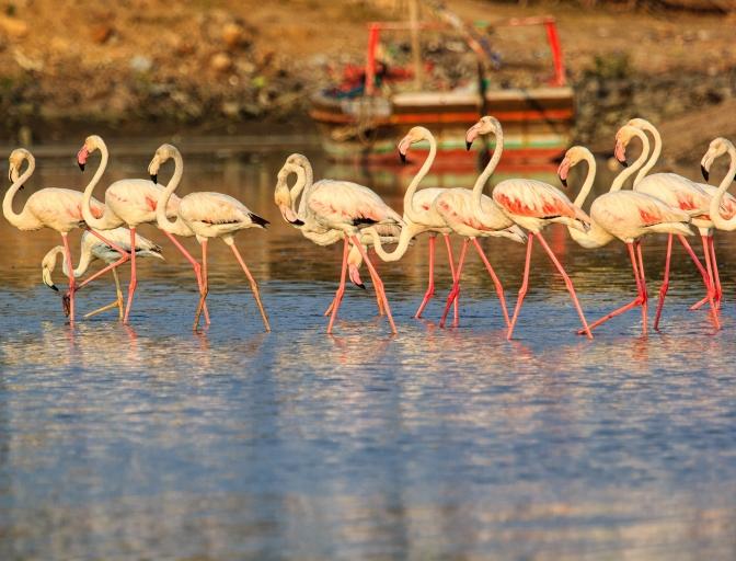 handofcolors_Flock of Flamingos
