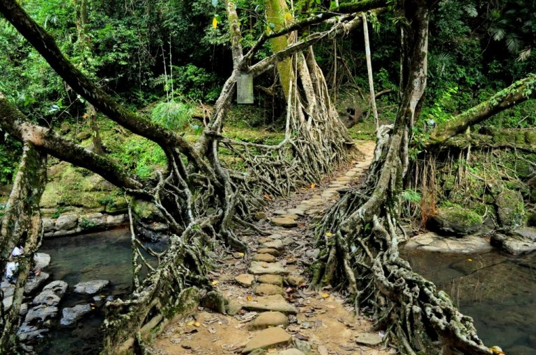 Living Root bridges of Mawlynnong.