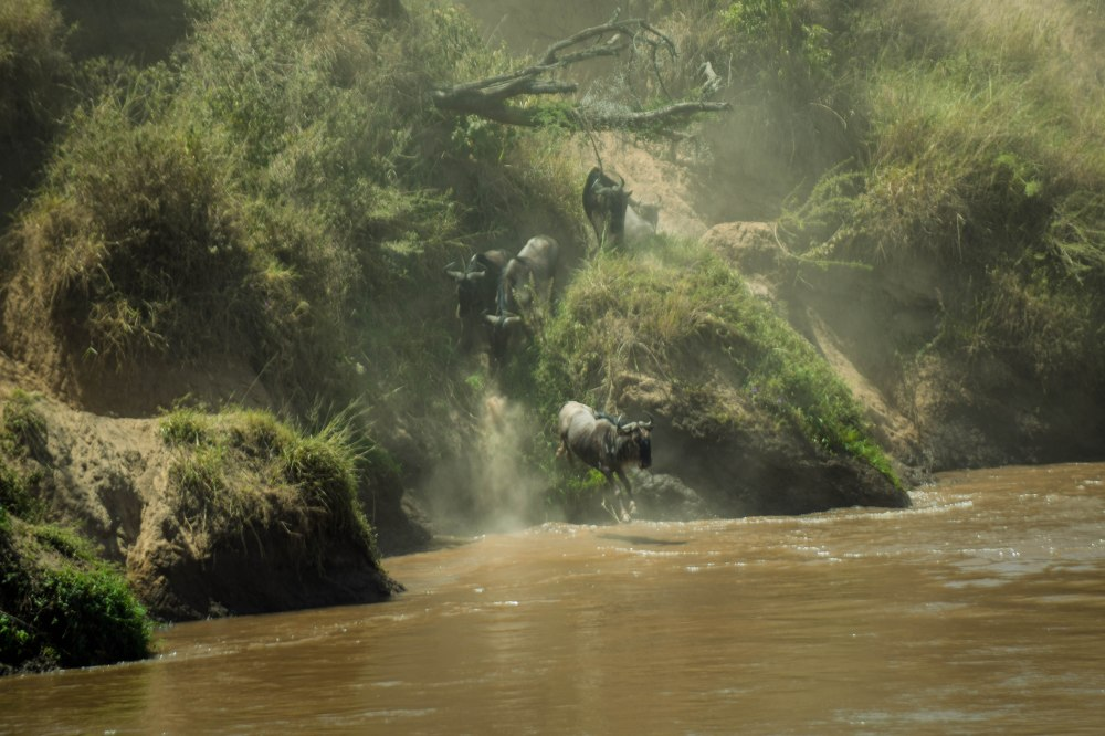 Great Migration_Masaai Mara