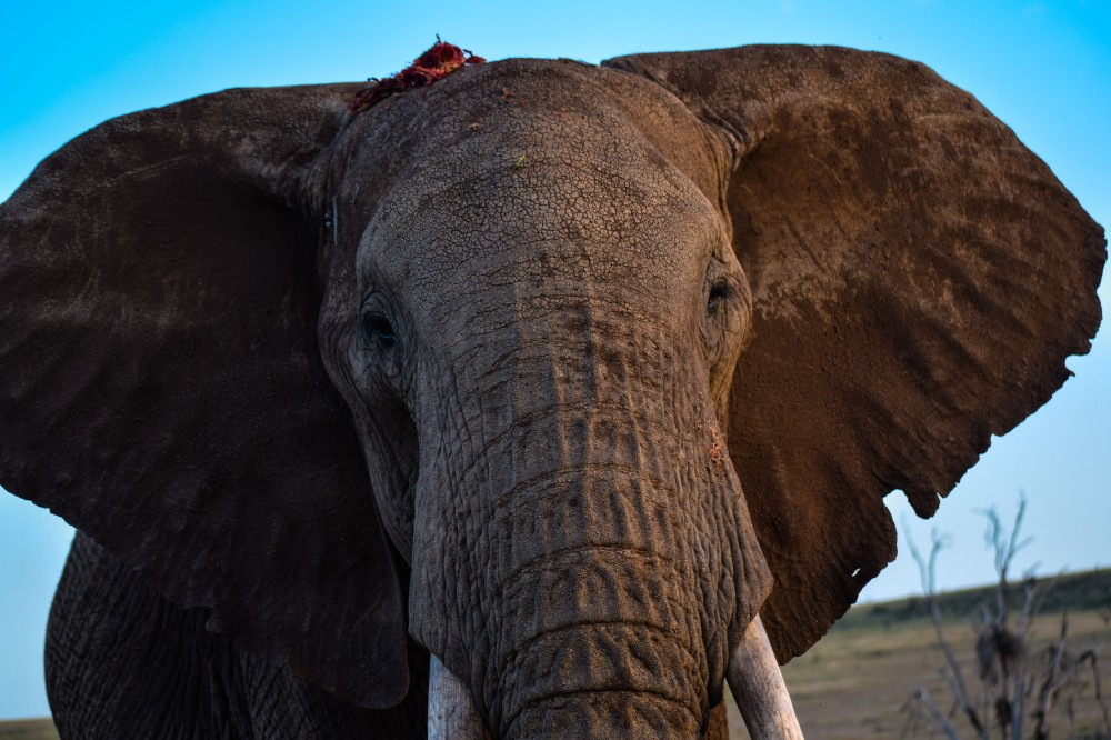 Lewa conservancy_Kenya