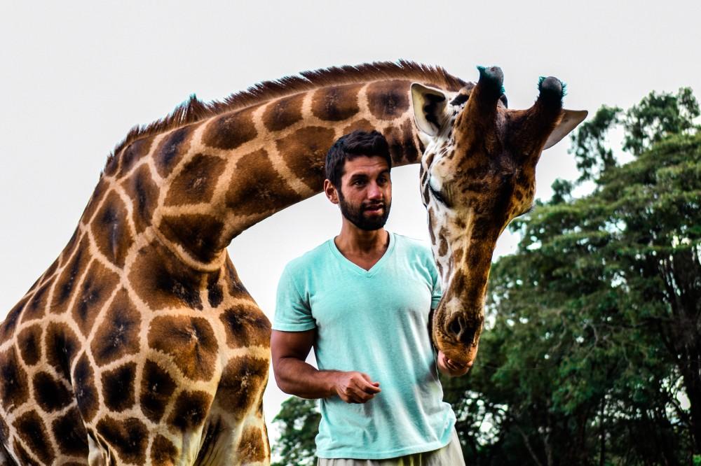 Feeding giraffe_Giraffe Manor