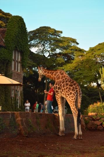 Giraffe Manor_Nairobi_Kenya