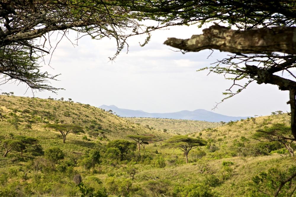 Lewa Safari Camp - accommodation - view