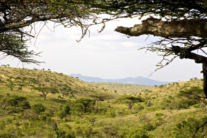 Lewa Safari Camp - accommodation - view