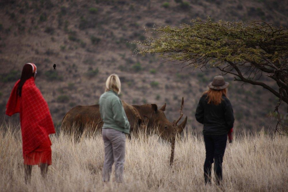 Lewa Safari Camp - activities - bush walk, white rhino-18