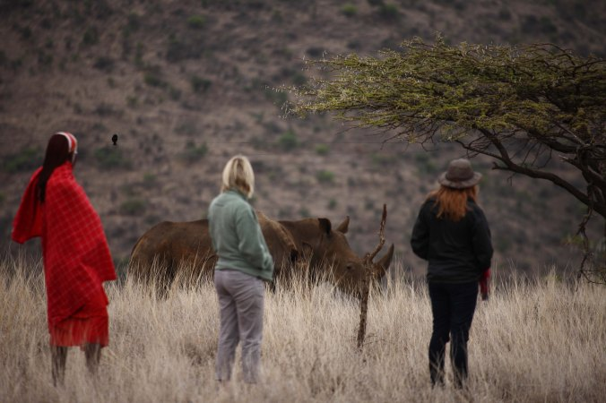 Lewa Safari Camp - activities - bush walk, white rhino-18