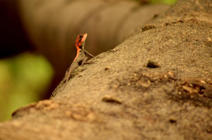 Fauna_Sanjay Gandhi National Park