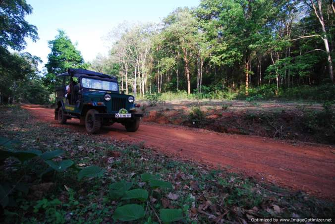 kali-tiger-reserve-safari