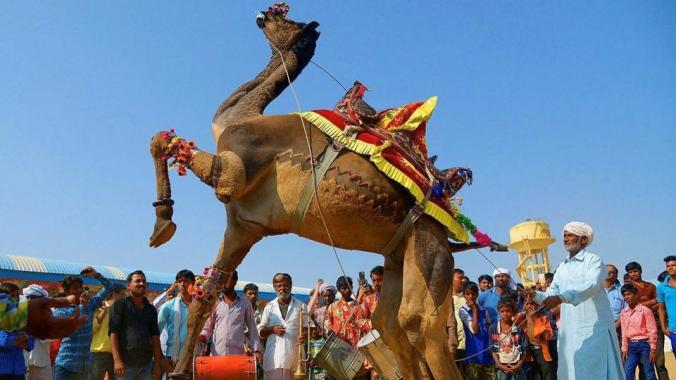 pushkar-fair_
