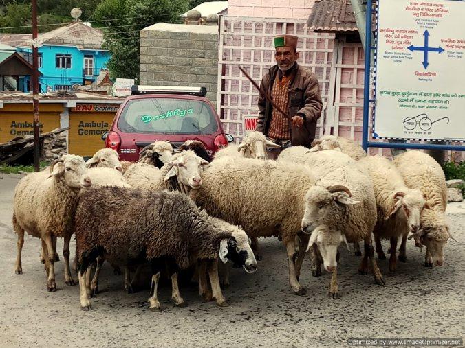 Village life_Kalpa